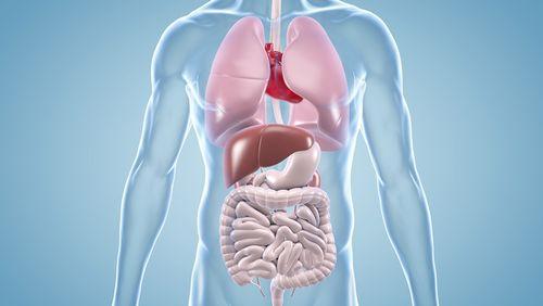 Innere Medizin: Operation Karriere